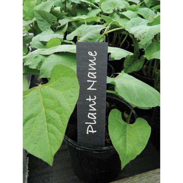 slate plant labels
